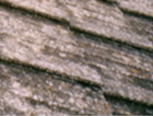 屋根セメント瓦コケカビ